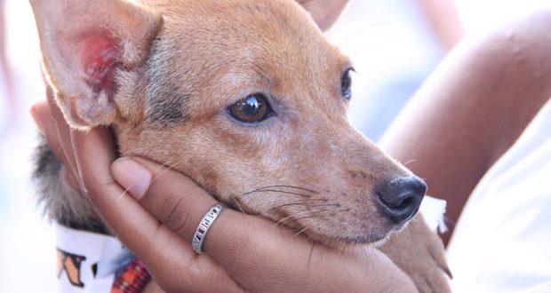 Interação de cães com humanos pode ter base genética, diz estudo