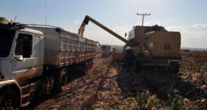 Expansão da soja eleva safra de grãos do país, diz Conab