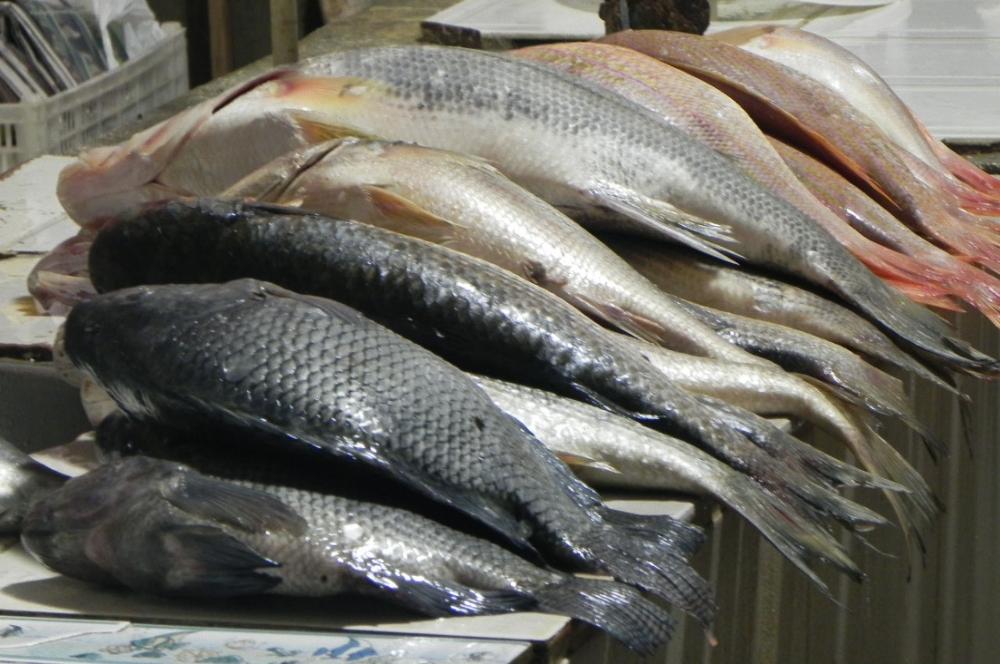 http://bahiareconcavo.com.br/site/wp-content/uploads/peixes_semana_santa.jpg